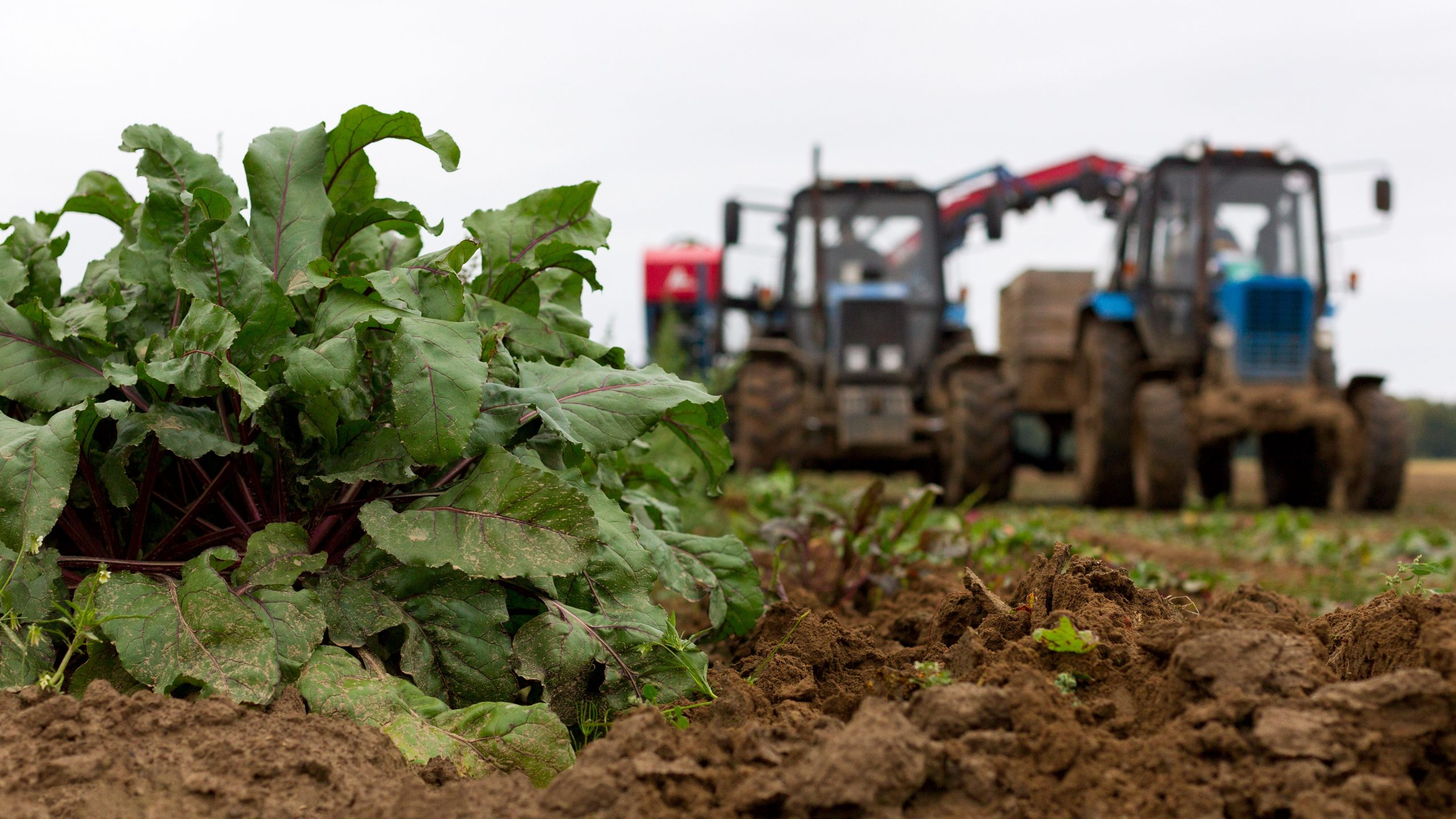 What are carbohydrates - agriculture machinery harvesting beet field